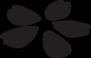 モノクロの桜