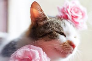 猫の日はなにするの?せっかくなので画像も集めてみた。