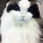 猫のおしっこ対策!初めてのぬこ様ならムービングトイレ!!