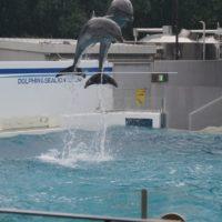 しながわ水族館のジャンプアップカードって知ってます?